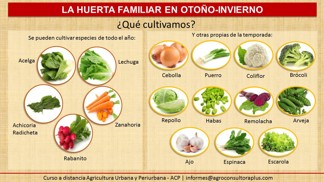 La huerta familiar en oto o invierno acp agroconsultora for Plantas beneficiosas para el huerto