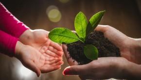 Agricultura Sustentable con énfasis en Manejo Integrado de Suelos