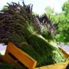 Cultivo de Plantas Aromáticas y Medicinales