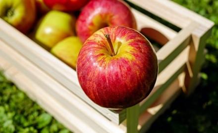 Cosecha, Poscosecha y Conservación de Frutas y Hortalizas