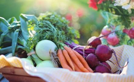 Agricultura Urbana: alternativa para el autoconsumo y la alimentación natural
