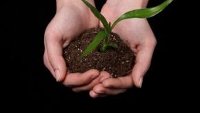 Huerta Urbana: beneficios del contacto con la naturaleza