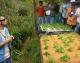 ¿Por qué la Hidroponia Popular Simplificada es el método de cultivo del futuro?