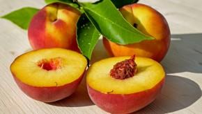 Cosecha y Poscosecha de Frutas y Hortalizas en Argentina