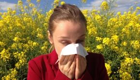 Hongos Medicinales para el Tratamiento de las Alergias