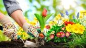 Manejo y Mantenimiento Sostenible de Jardines