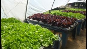 Hidroponía Popular Simplificada: verduras y hortalizas en cantidad y calidad