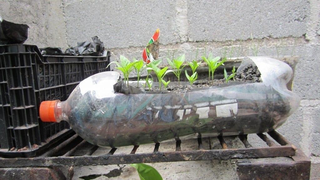 Ejemplos de contenedores reciclados) Panamá.