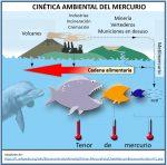 Cinética del mercurio - Contaminación en Minamata, Japón - Efluentes