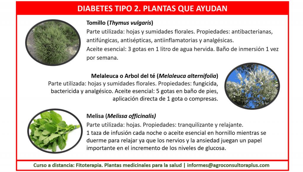 Diabetes y Fitoterapia