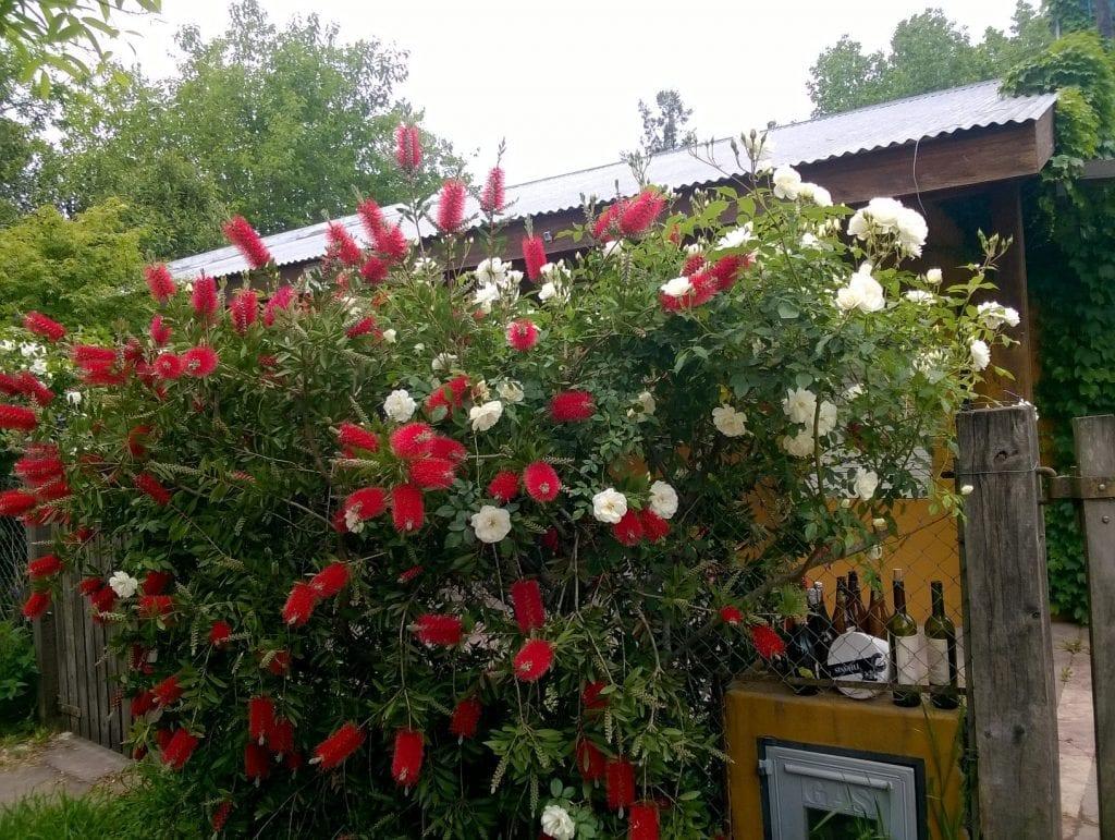 El arte de manejar un jardín de forma sostenible