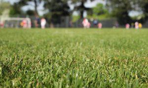 Curso a Distancia - Cuidado y Manejo de Césped en Predios Deportivos